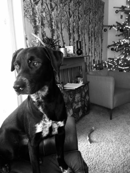 Ash the dog. #thepupash