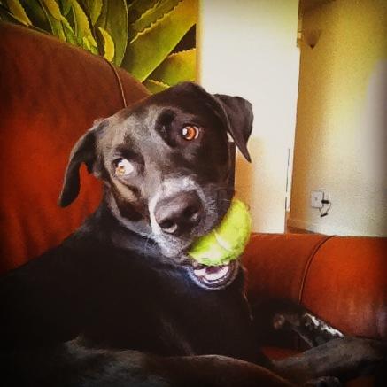 Ash the dog.